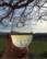 Glass par Joyce Zurub