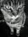 chat du jour par Nicolas Spuhler