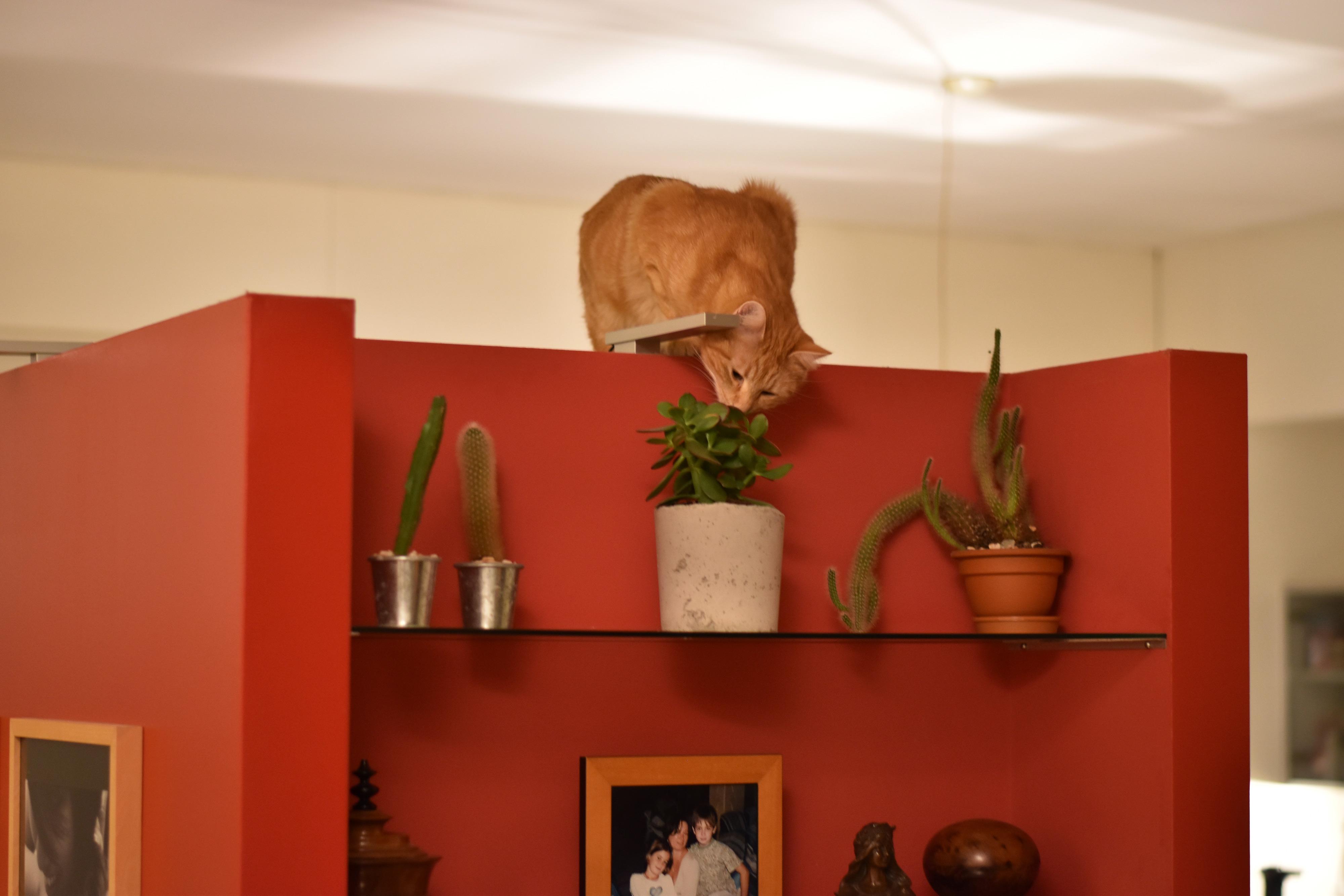 Miaou par Justine Grespan