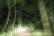 route en forêt par Nicolas Spuhler