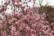 Blossom par Anna Salzmann