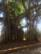 And into the forest I go par Joyce Zurub