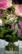 bouquet par Nicolas Spuhler