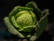 Refuge à mouches blanches par Shlomith Bollag