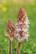 Le beau parasite par Shlomith Bollag