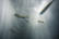 Banyuls par Nicolas Spuhler