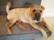 Dogs do speak par Joyce Zurub