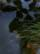 herbes par John Grinling