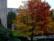 J'aurais voulu un hêtre c'est un chêne par John Grinling