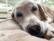 Sleepy Chad par Anna Salzmann