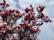floraison par John Grinling