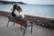 Love On The Shore par Gérard Dubois