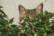 le chat de la voisine par Pierre Montant