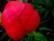 rouge par John Grinling