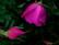 la couleur des filles par John Grinling