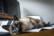 Télé chat travail par Nicolas Spuhler