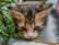 «Se regalan gatitos» par Rodrigo Alonso
