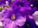 cœurs violets par John Grinling