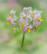Frittes en fleur par Shlomith Bollag