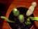 cacti par John Grinling