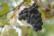 Le vin en pilules par Shlomith Bollag