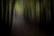 Dans les bois par Nicolas Spuhler