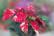 Des signes de Noel par Shlomith Bollag