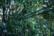 Hojas verdes par Rodrigo Alonso