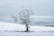 05/01/2021 par Tristan Zilberman