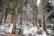 03/01/2021 par Shlomith Bollag