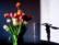 Pane e tulipano par Michel Bruno