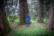 Le cercle des géants par Shlomith Bollag