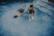 Sous l'eau par Nicolas Spuhler